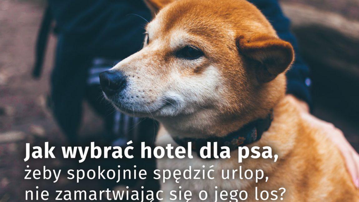 Jak wybrać hotel dla psa, żeby spokojnie spędzić urlop, nie zamartwiając się o jego los?